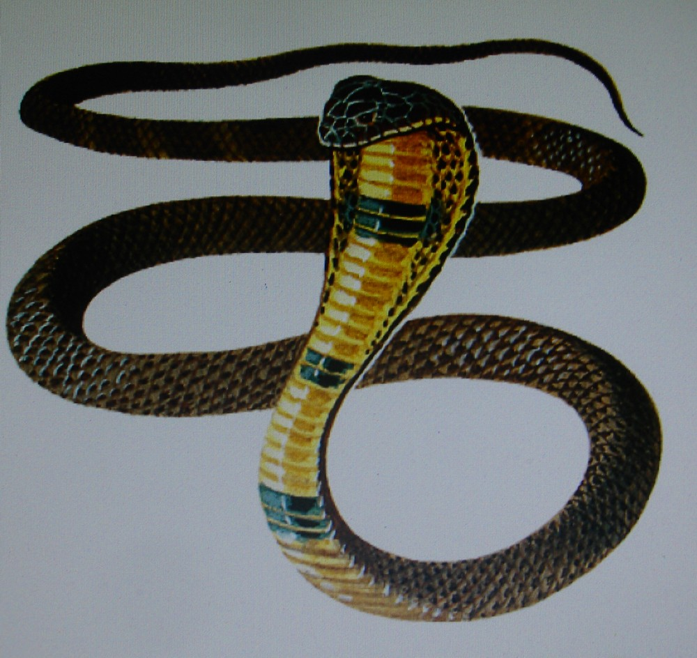 Instituto internacional hermes the image of the snake in ancient this explains why it was so essential for the author of the bible to emphasize the dichotomy between egypt and the israelites and how in his eyes the buycottarizona Gallery